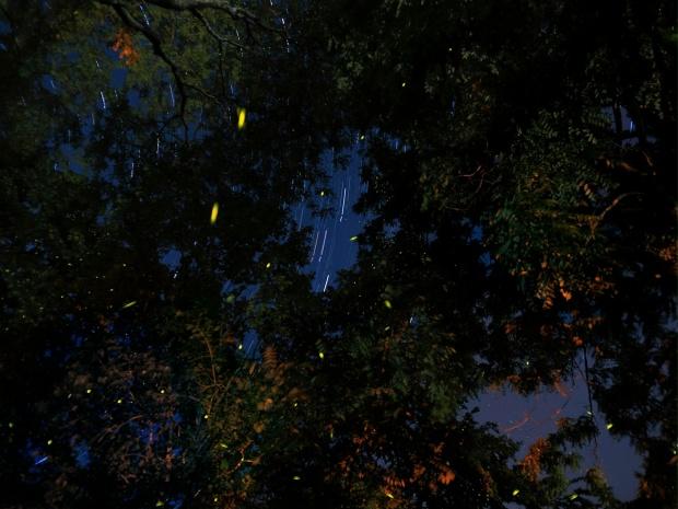 """""""Trees"""""""